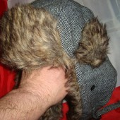 Фірмова зимова шапка .