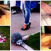Новые, фирменные, шикарные, очень удобные туфельки. размеры - 37, 37.5, 38, 38.5, 39.