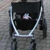 Универсальная коляска 2в1 Coletto Dante