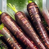 Семена - Морковь Пурпурный космос, 100 шт.