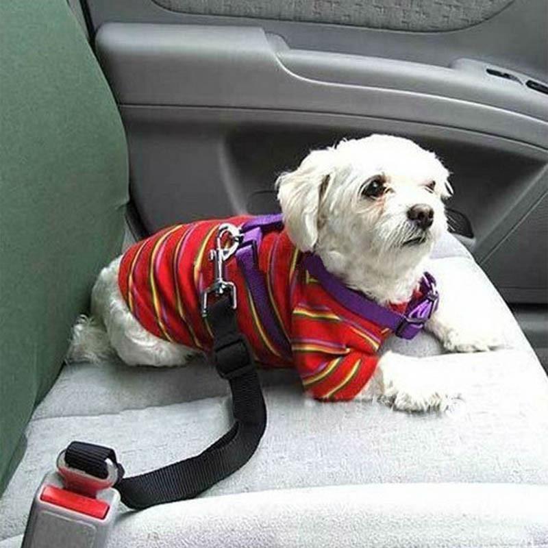 Ремень безопасности для собак и котов в автомобиль фото №1