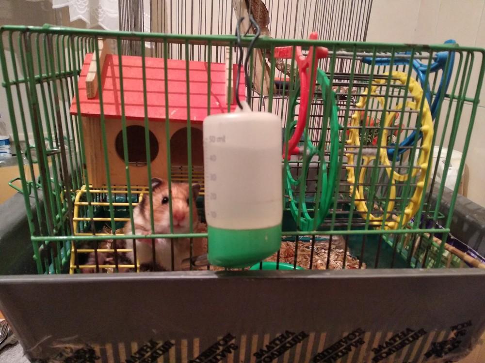 гостиница грызунов передержка зооняня хомяки шиншиллы свинки кролики фото №1