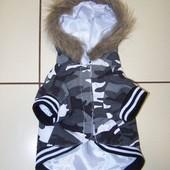 Куртка для маленькой собачки,бесподобная