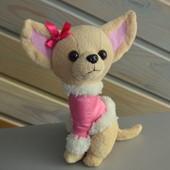 Собачка Чихуа хуа