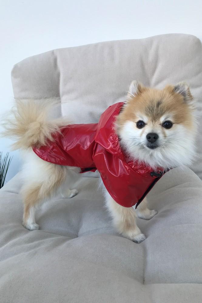 Дождевик плащ для собачек dogs bomba красный m-43 фото №1
